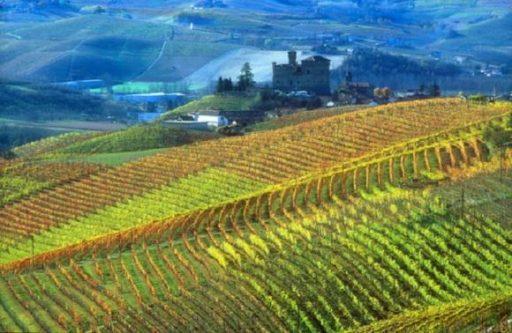 Piemonte, le principali varietà da vino coltivate