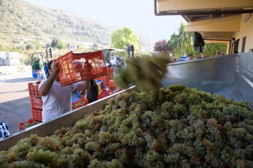Cooperazione vinicola, Italia leader nell'Ue
