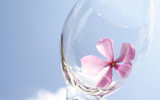 Nuova Zelanda, inizia l'era dei Lifestyle wines