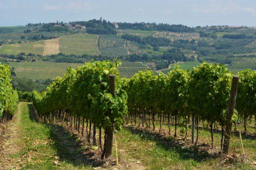 Toscana: produzione 2017 a -40%