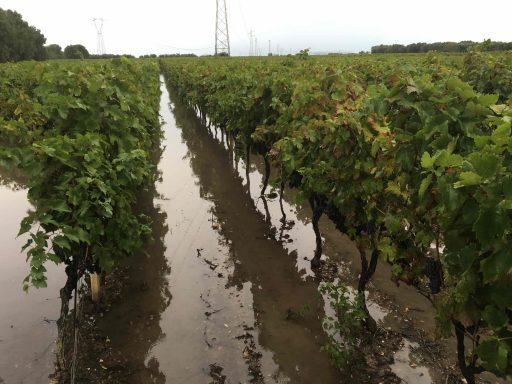 Maci, Due Palme: la pioggia sta mettendo a rischio la vendemmia