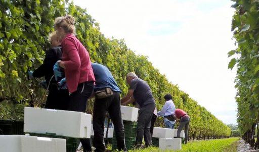 DiVento: il vino sostenibile e solidale delle Donne della Vite